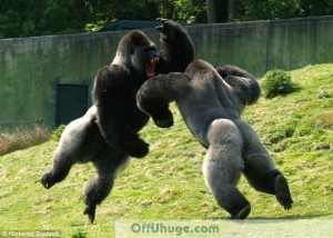 apes moshing