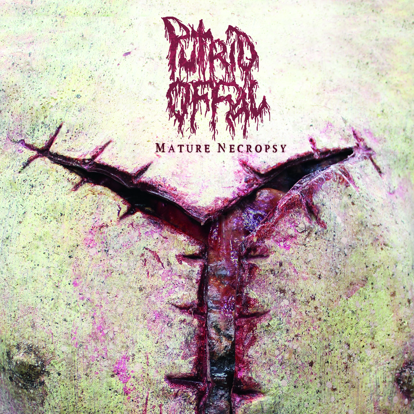 Putrid Offal – Mature Necropsy Review