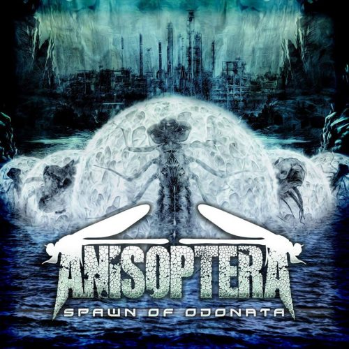 Anisoptera - Spawn of Odonata 01